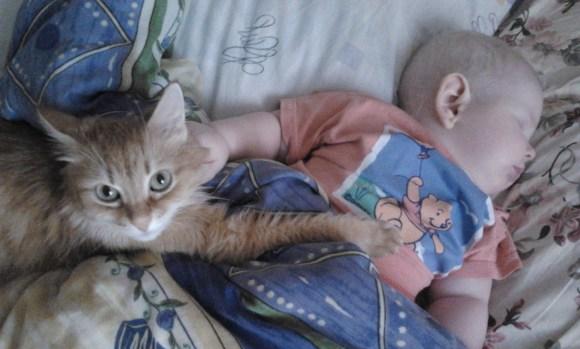 кошка и дети