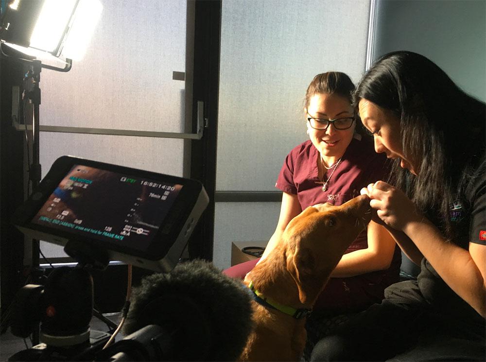 Veteos Custom Veterinary Video Production Video Shoot