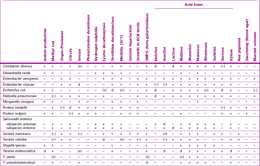 Microbiology Bacterial Identification Table