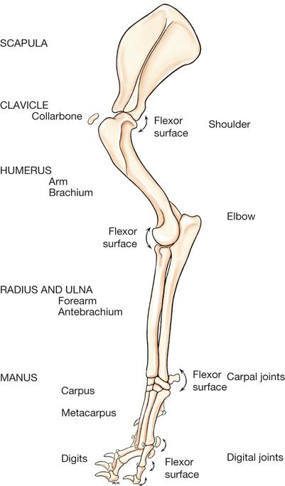 Dog Leg Anatomical Diagram Web About Wiring Diagram
