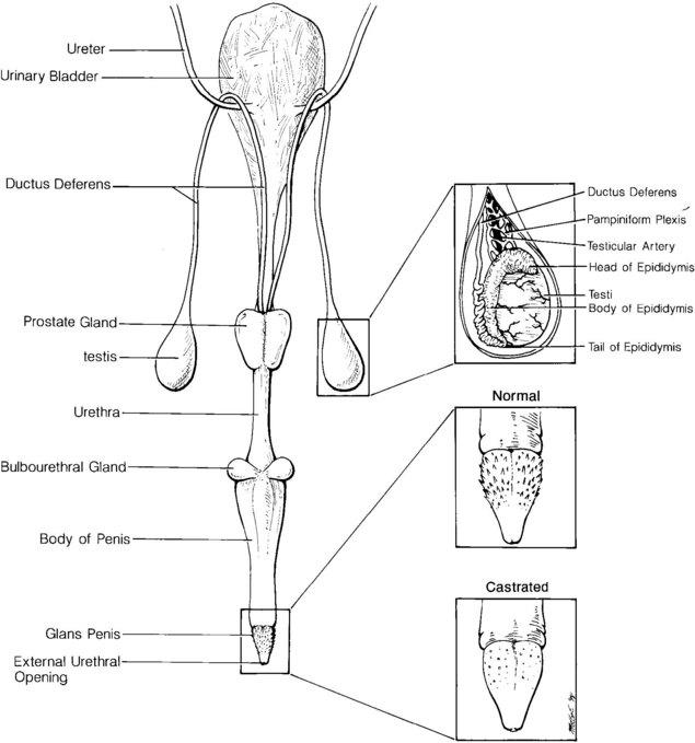Cat Reproduction Diagram : 24 Wiring Diagram Images