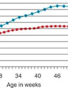 Figure mean growth curves for domestic cats this graph is  relative time line kittens also veterian key rh veteriankey