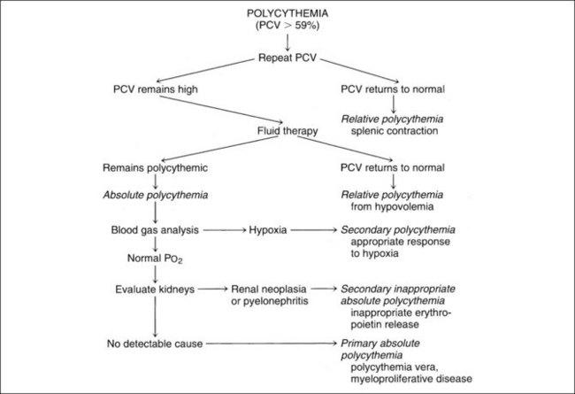 Erythrocyte Disorders | Veterian Key
