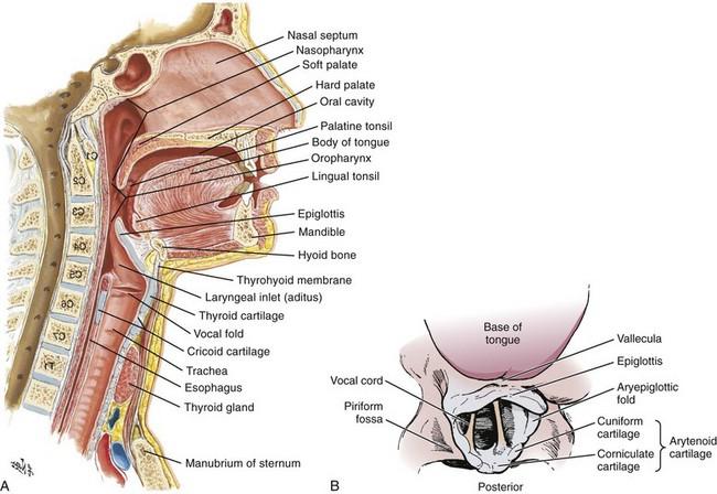 Laryngoscope Airway View