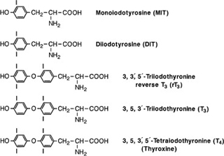Thyroid Function Veterian Key
