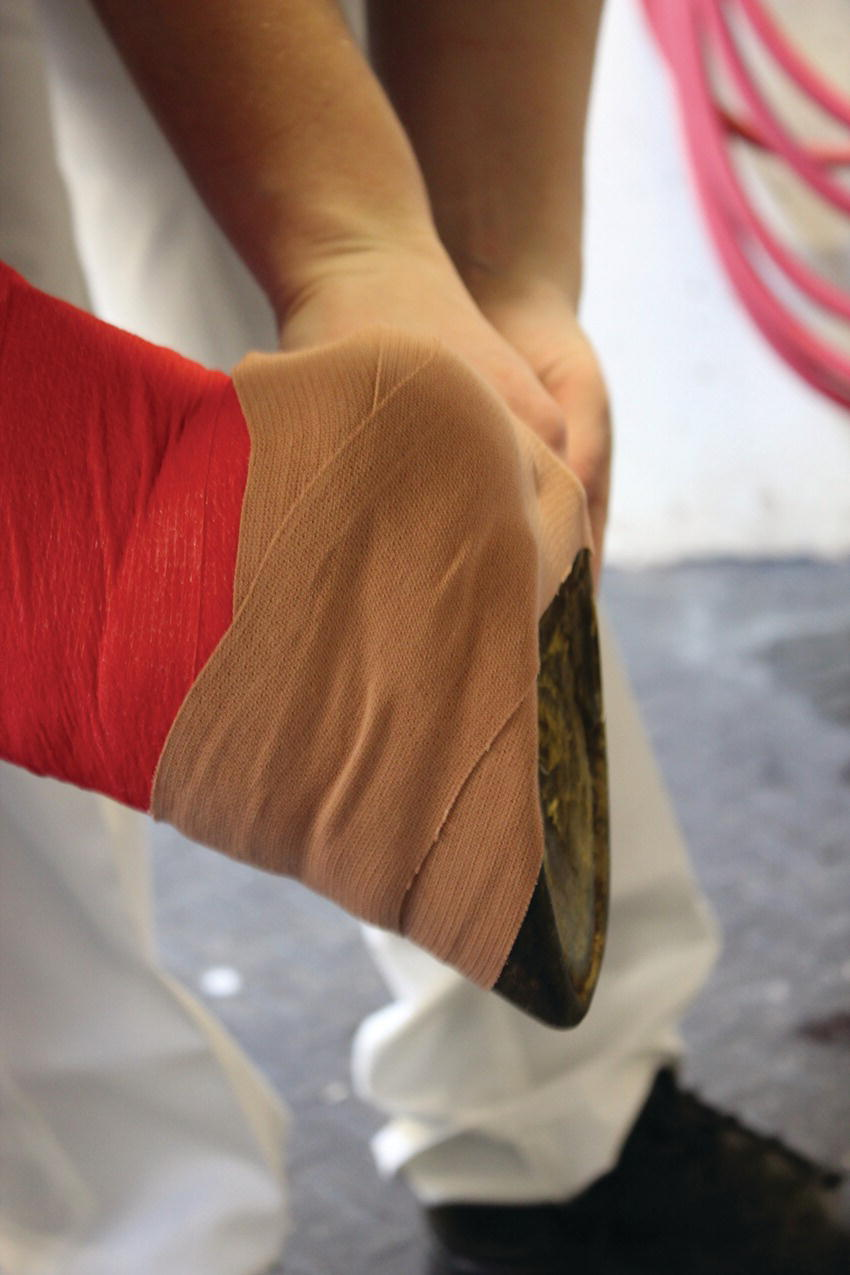 Photo displaying a bandaged hoof for wounds of the pastern region in a horse.