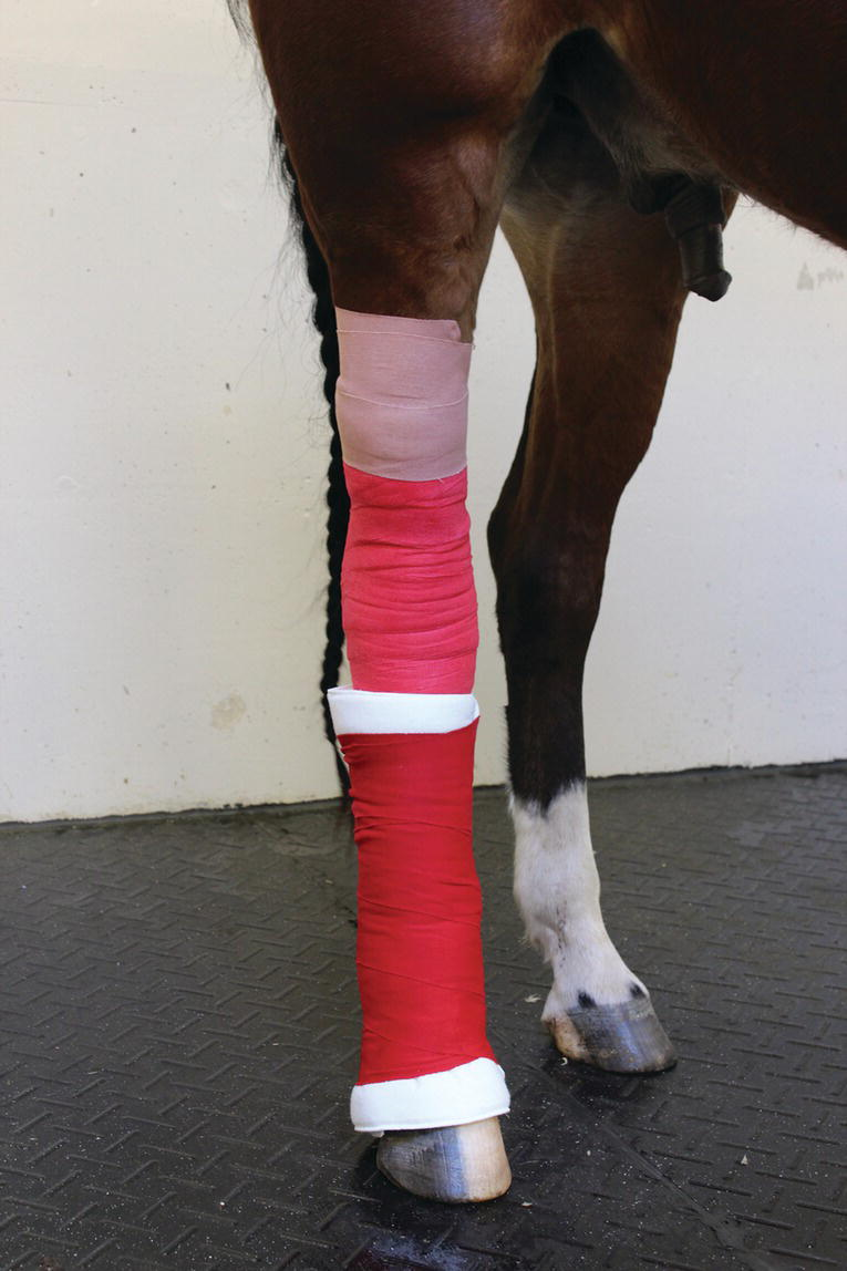 Photo displaying the addition of a distal limb bandage to help hold the carpal or tarsal bandage in place.