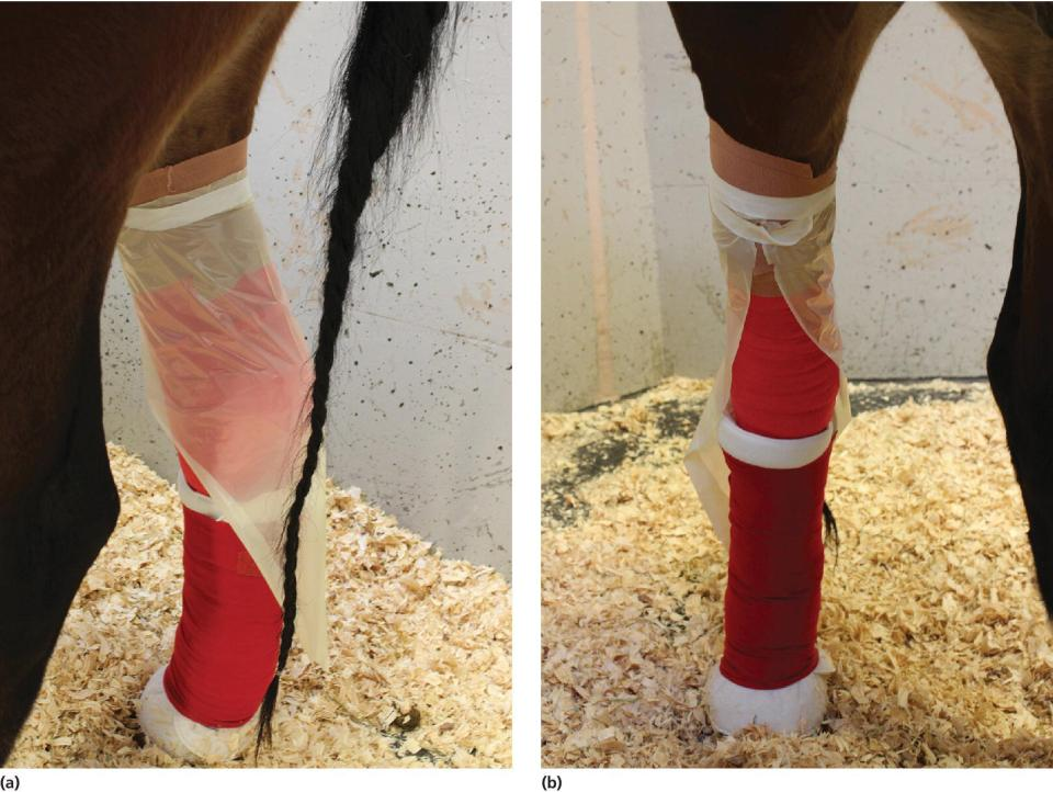 2 Photos displaying rectal sleeve sliced lengthwise and attached over the plantar surface of the bandage (left) and cranial view of the rectal sleeve acting as a rain jacket (right).