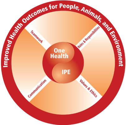 A diagram for depicting the relationships between interprofessional practice and education (IPE) and One Health with text in different regions of concentric circles connected by lines.