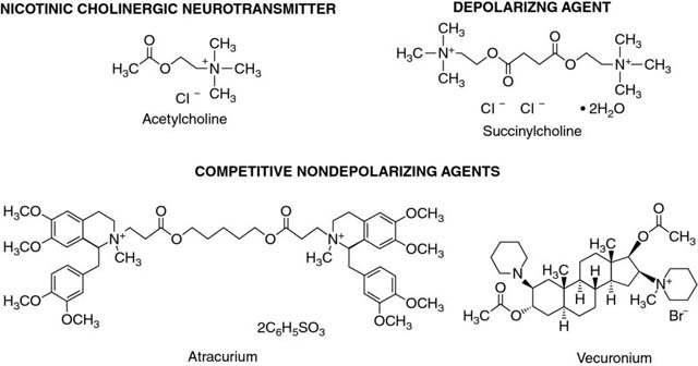 Diagram shows chemical structures of acetylcholine, succinylcholine, vecuronium, and atracurium.