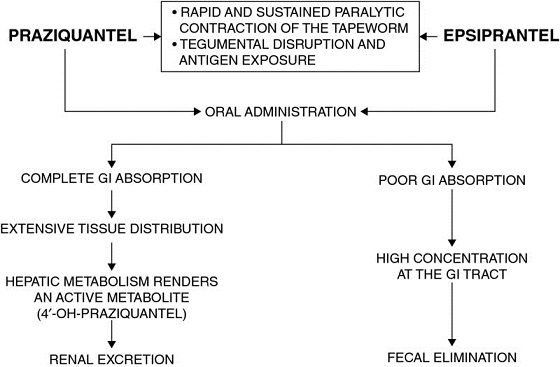 Chart shows praziquantel and epsiprantel leads to oral administration which leads to complete GI absorption and poor GI absorption, et cetera.