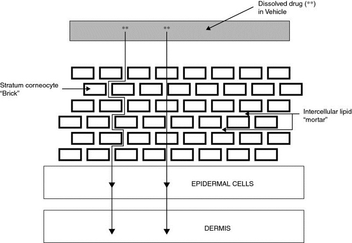"""Diagram shows """"brick and mortar"""" model of skin with markings for dissolved drug (**) in vehicle, stratum corneocyte """"brick"""", intercellular lipid """"mortar"""", epidermal cells, and dermis."""