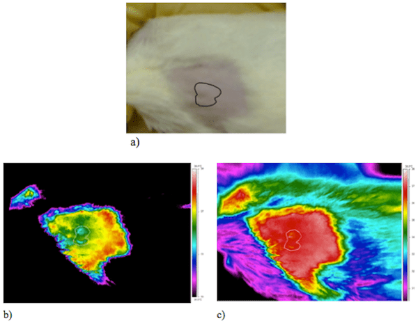 Thermography In Animal Models Of Cancer Veterian Key
