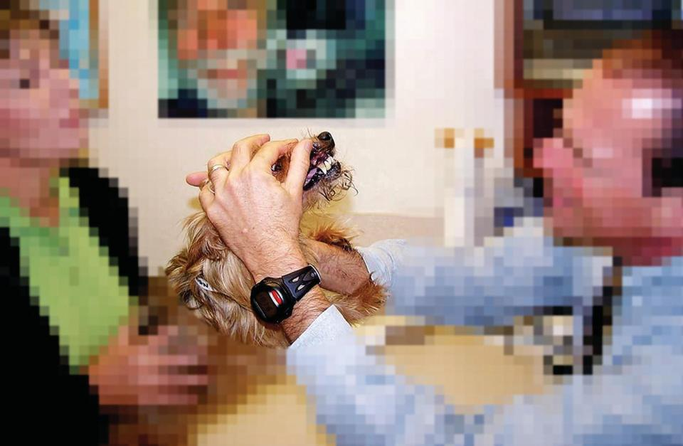 A man examining the lips and face of a dog held by a woman.