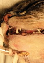 Oral Surgery – Fracture and Trauma Repair