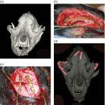 Maxillofacial and Mandibular Fractures