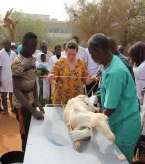 Vétérinaires Sans Frontières, Niger, ambassadeurs
