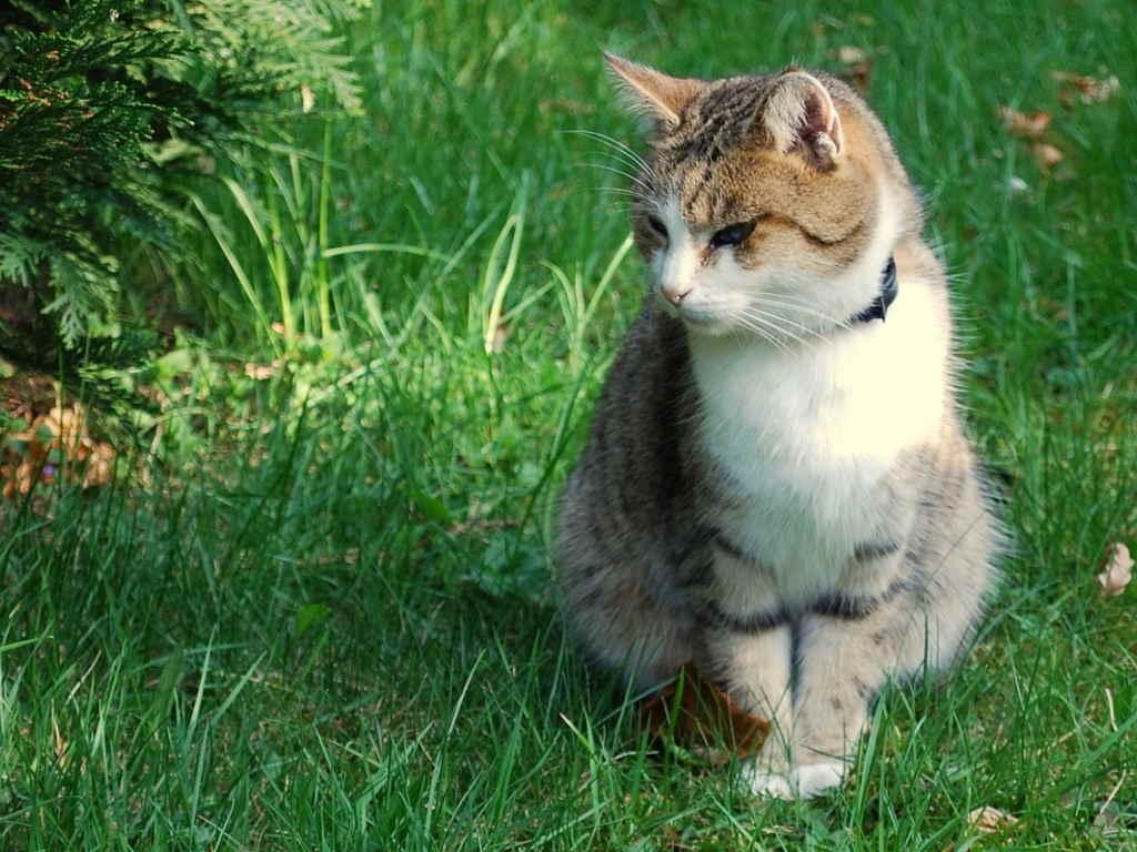 Как проявляется сердечная недостаточность у котов