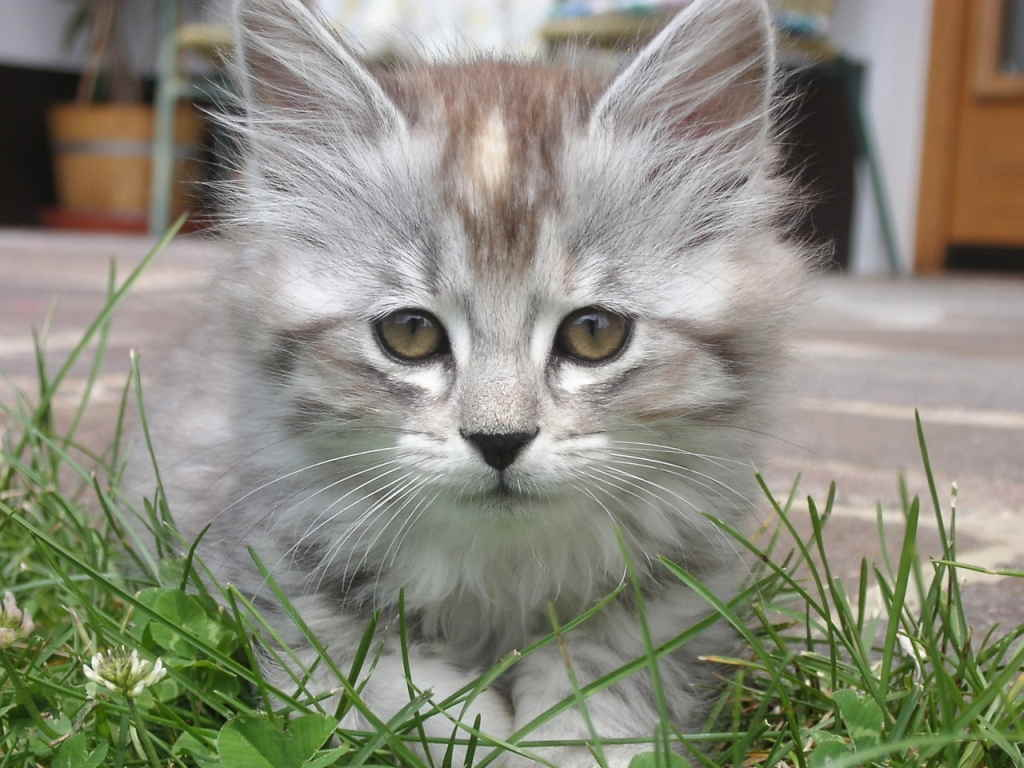 Как лечить насморк у кошки в домашних условиях
