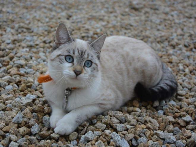 У кошки жирная шерсть чем лечить. Почему у кота жирная шерсть и коричневые пятна на хвосте