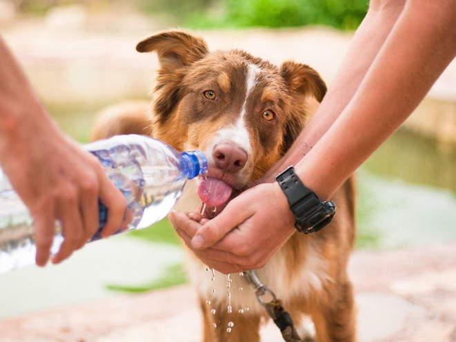 Почему щенок не пьет воду и что делать владельцу в этой ситуации