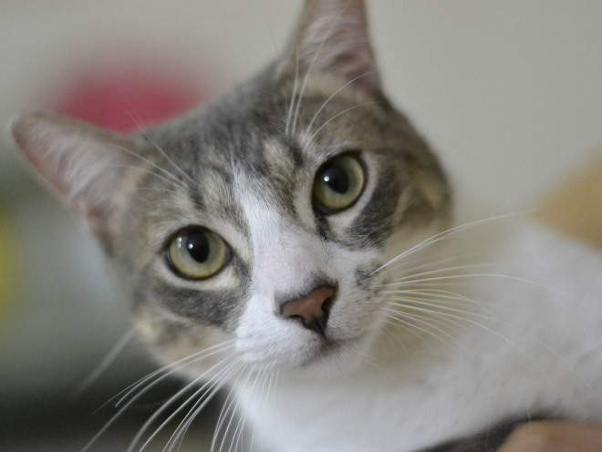 Котенок падает на задние лапы. Паралич у кошек – не приговор