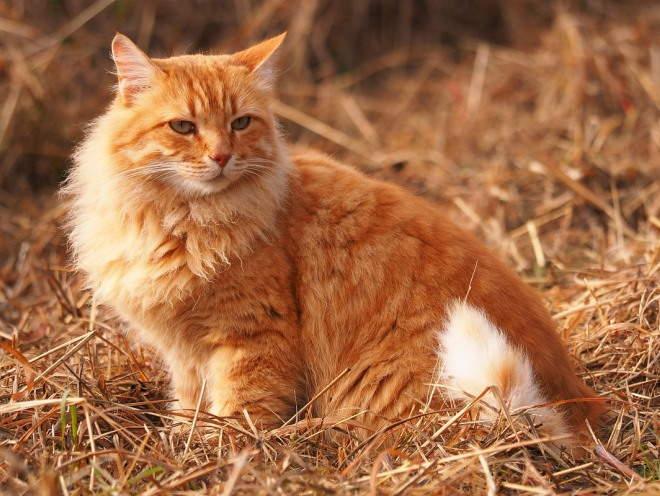 Почему кот плохо ходит задними лапами