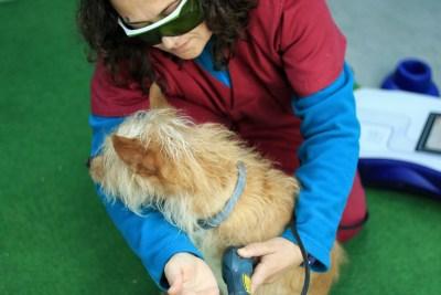Terapia Láser para animales