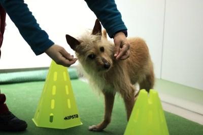Fisioterapia canina