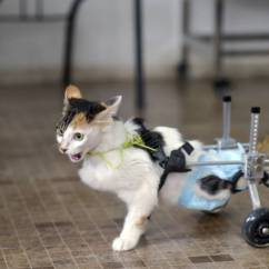 Wheelchair For Cats Glider Chair Slipcovers Repairs Your Cat S Or Mobility Cart 21 October 2015 If You Have To Send The Back Online Store Find Out Ahead Of Time Will Pay Shipping Visit This Website Know