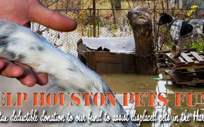 VCF Creates Helping Houston Pets Fund for Flood Victims