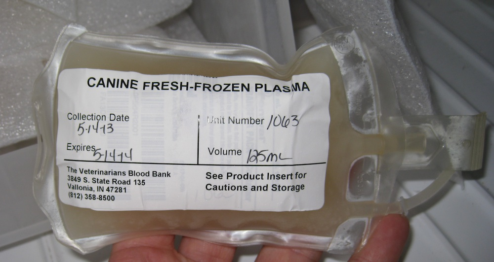 What Fresh Frozen Plasma