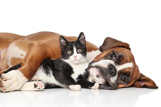 Resultado de imagem para kidney and cat and dog