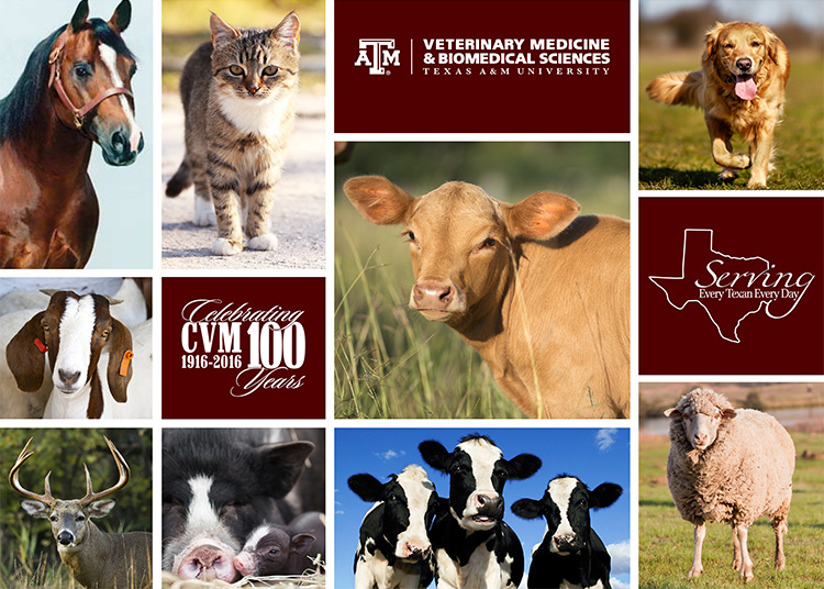 Texas A&M System To Extend Reach Of Texas A&M College Of