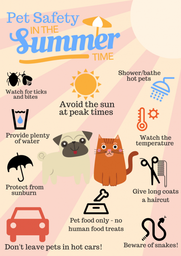 Pet Safety in the Summer Time Outdoor Safety for Pets