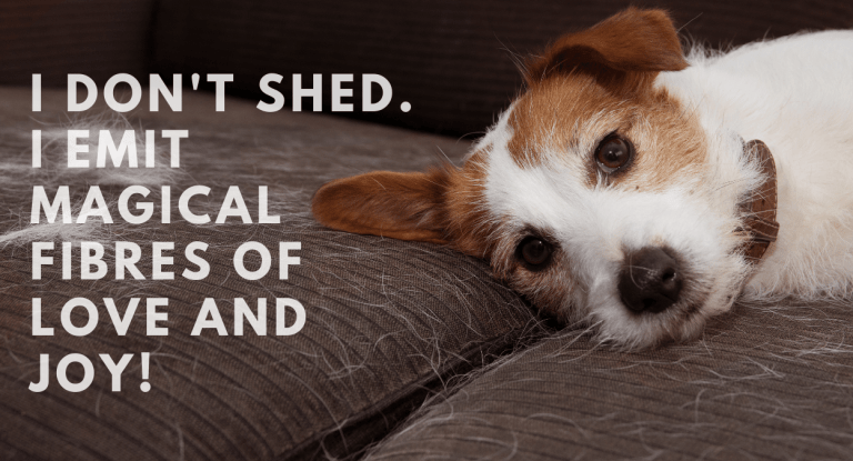 shedding-management-in-dogs