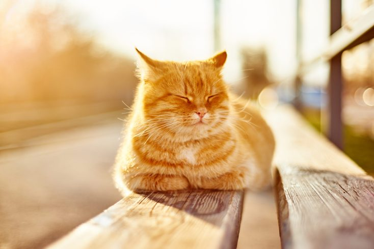 the upper-temperature limit for cats (indoor and outdoors)