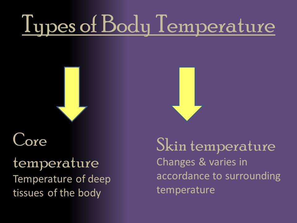 core body temperature of cats and importance of cat's core body temperature.