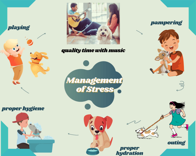 tips to manage stress in dogs
