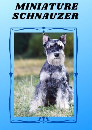 the breed schnauzer although has long hair even then it doesn't shed or smell.