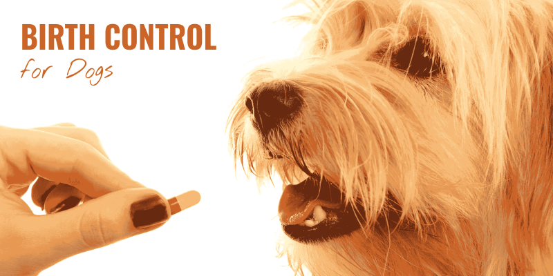 birth control drugs for dogs