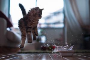 Почему кот всего боится и прячется. Основные причины, почему кошка нервничает