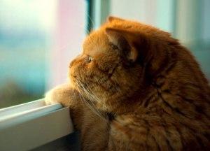 У кота через двое суток повторился пневмоторакс. Пневмоторакс у животных
