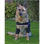 DogLeggs for Elbow Hygromas in Dogs