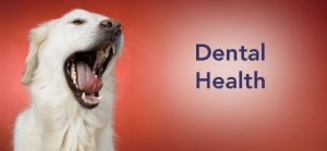 Dental Health Products for Pets are Available at VetRxDirect