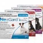 NexGard Available at VetRxDirect