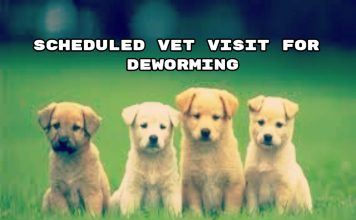 Scheduled Vet Visit for DeWorming