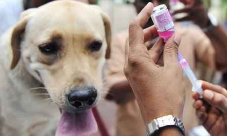 Vaccination of Dogs • Scheduled Vet Visit for Vaccination