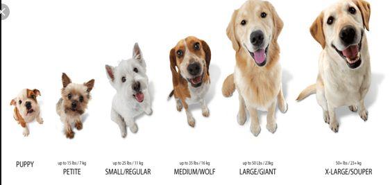dog size comparision