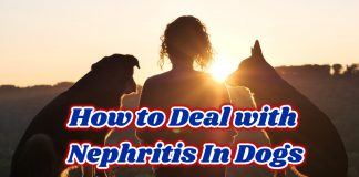 How to Deal with Nephritis In Dogs